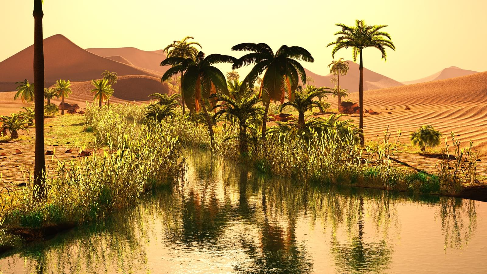 picture of an oasis